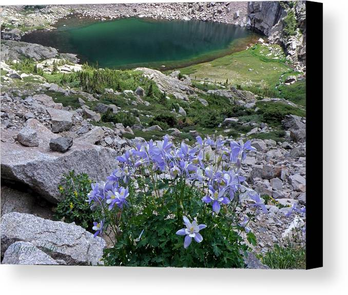 Landscape Lake Flowers Columbines Peacock Lake Chasm Lake Longs Peak Colorado Wilderness Mountains  Canvas Print featuring the photograph Columbines by George Tuffy