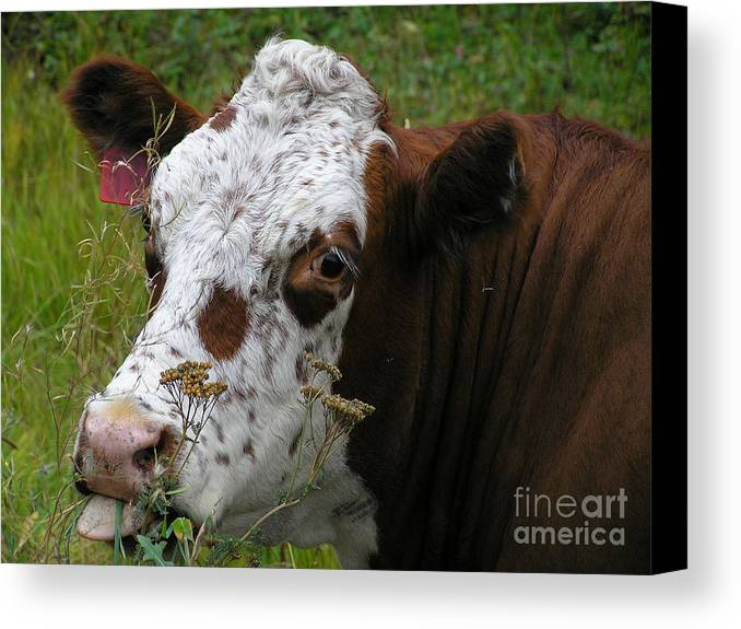 Tongue Canvas Print featuring the photograph Cow Tongue by Louise Magno