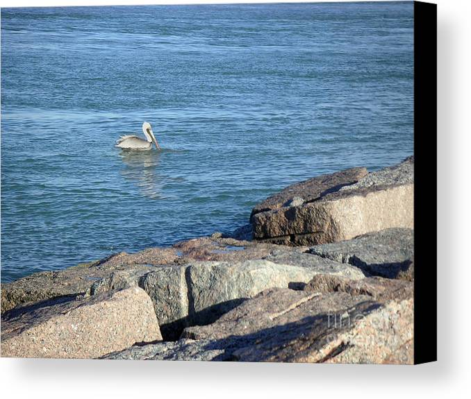 Nature Canvas Print featuring the photograph Creatures Of The Gulf - Pelican Landing by Lucyna A M Green