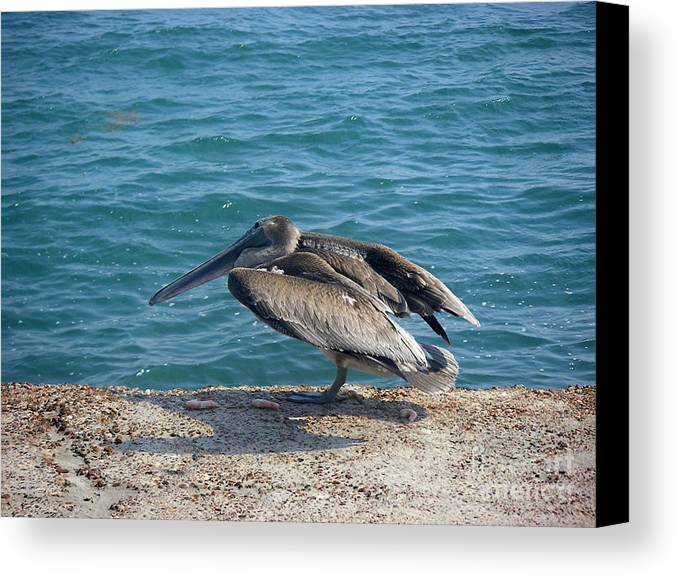 Nature Canvas Print featuring the photograph Creatures Of The Gulf - Scratch N' Sniff by Lucyna A M Green