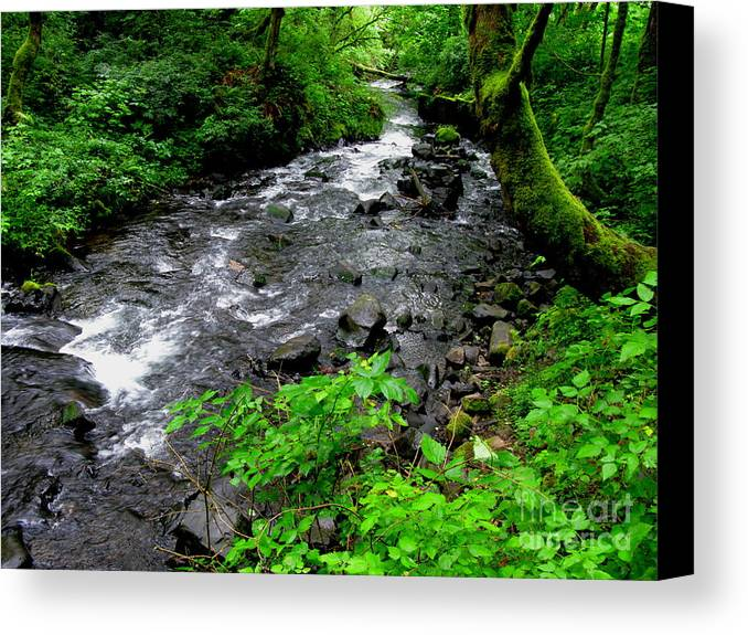 River Canvas Print featuring the photograph Creek Flow by PJ Cloud
