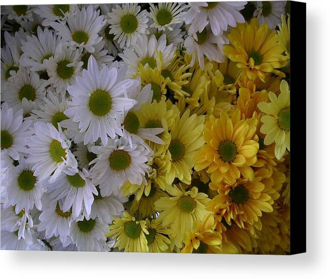Daisies Canvas Print featuring the photograph Daisies by Nancy Ferrier