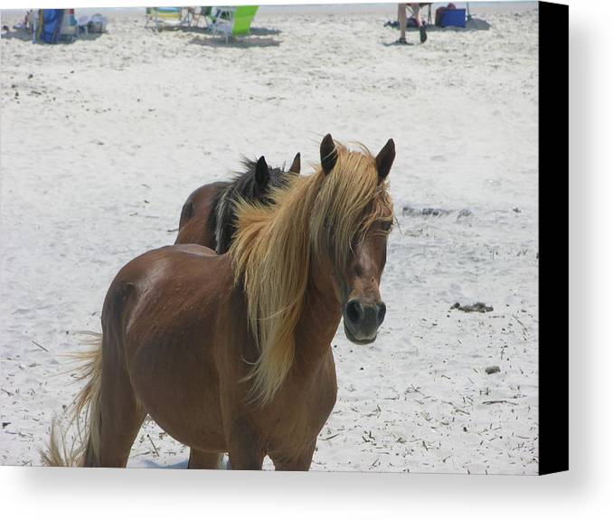 Horses Canvas Print featuring the photograph Day At The Beach by Helen Haw