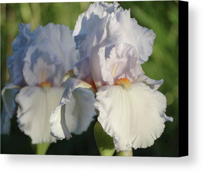 Iris Canvas Print featuring the photograph Delicate White Iris by Rebecca Overton