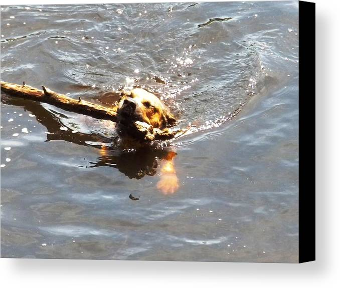 Dog Canvas Print featuring the photograph Determination by Karen Moulder