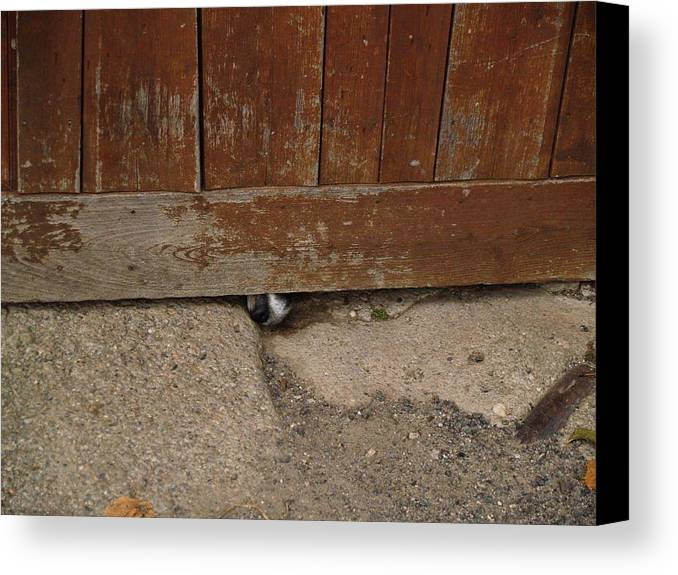 Dog Canvas Print featuring the photograph Dog At The Door by Aline Kala