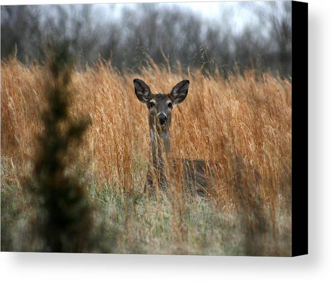 Animal Canvas Print featuring the photograph Down For The Night by David Dunham