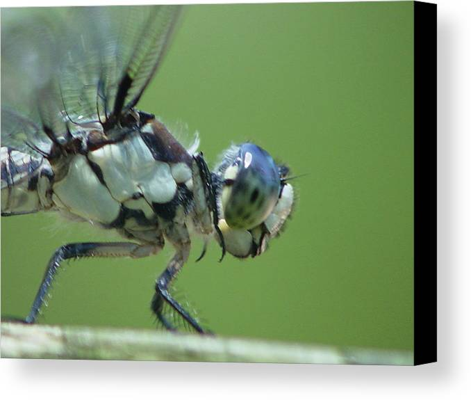 Dragonfly Canvas Print featuring the photograph Dragonfly by Tina B Hamilton