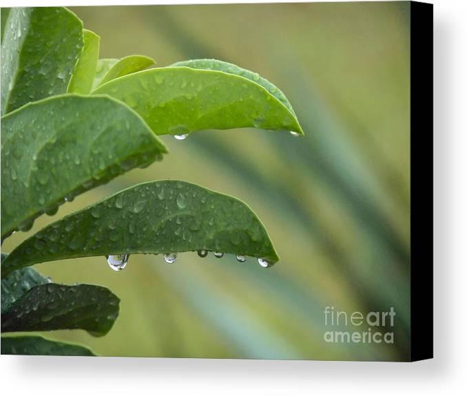 Rain Canvas Print featuring the photograph Droplets by Linda Vodzak