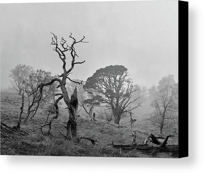 Canvas Print featuring the photograph Dusk, Crannoch Woods by Iain Duncan