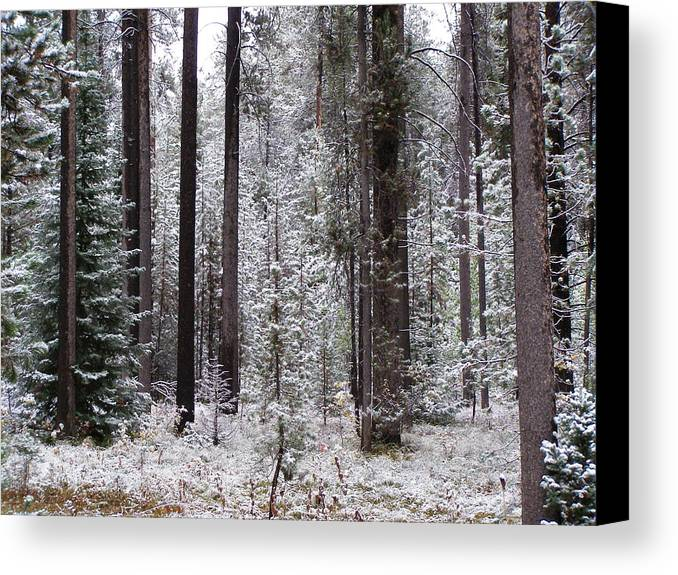 Snow Canvas Print featuring the photograph Early Winter by DeeLon Merritt