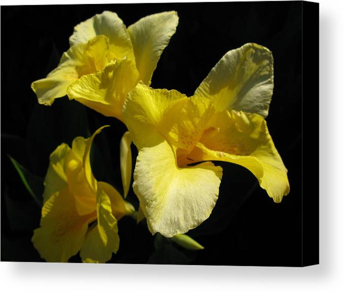 Yellow Flower Canvas Print featuring the photograph Elegant Surprise by PJ Cloud