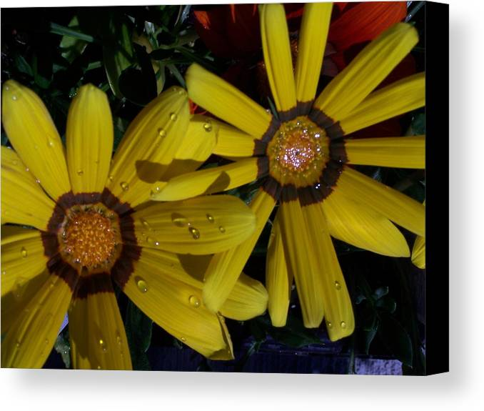Flowers Canvas Print featuring the photograph Eyes For You by Vijay Sharon Govender