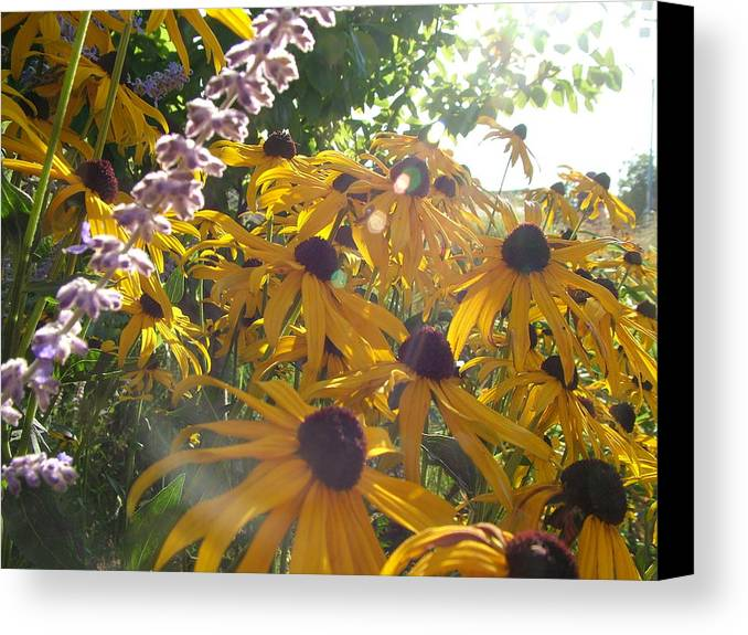 Wild Canvas Print featuring the photograph Fairy Flying by John Loyd Rushing