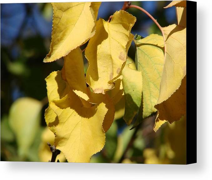 Fall Colors Canvas Print featuring the photograph Fall Colors by Liz Vernand