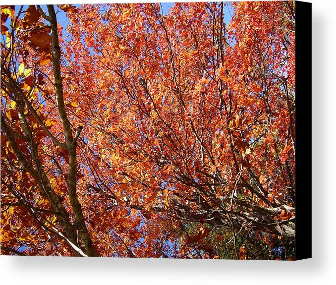 Fall Canvas Print featuring the photograph Fall In The Blue Ridge Mountains by Flavia Westerwelle
