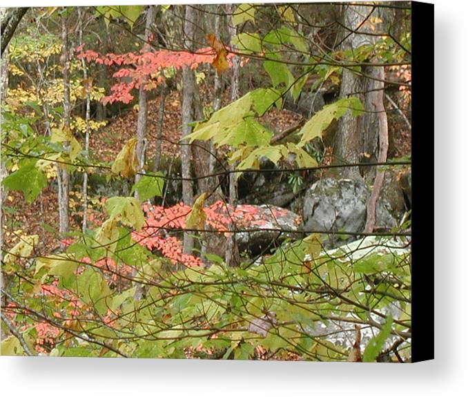 Fall Canvas Print featuring the photograph Fall Is Here by Bj Hodges