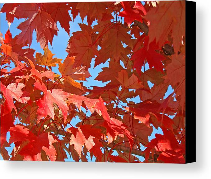 Autumn Canvas Print featuring the photograph Fall Tree Leaves Red Orange Autumn Leaves Blue Sky by Baslee Troutman