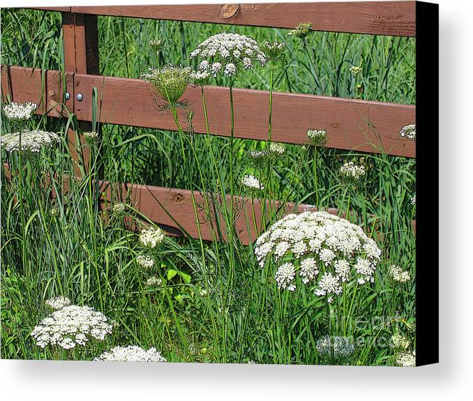 Flower Canvas Print featuring the photograph Field Of Lace by Ann Horn