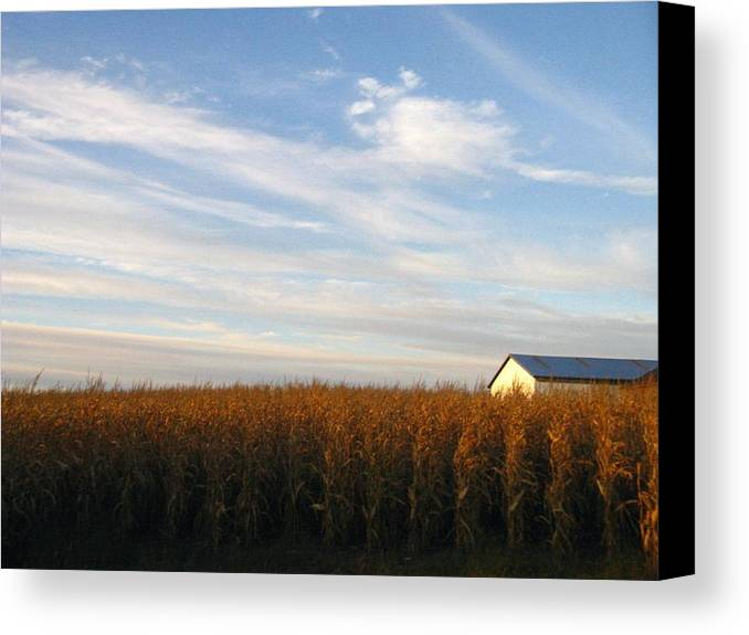 Country Canvas Print featuring the photograph Fields Of Gold by Rhonda Barrett