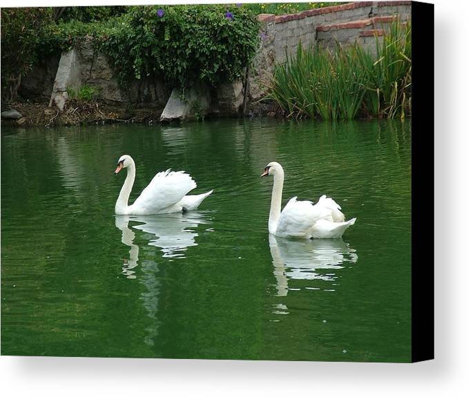 Swan Canvas Print featuring the photograph Floating Love by John Loyd Rushing