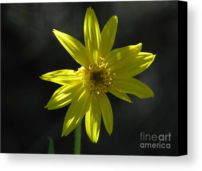 Light Canvas Print featuring the photograph Floral by Amanda Barcon
