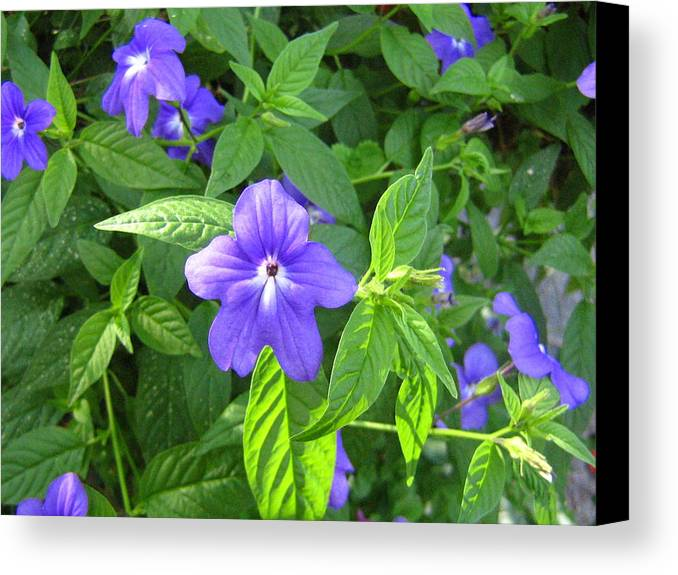 Flower Canvas Print featuring the photograph Floral Photo by Melissa Parks