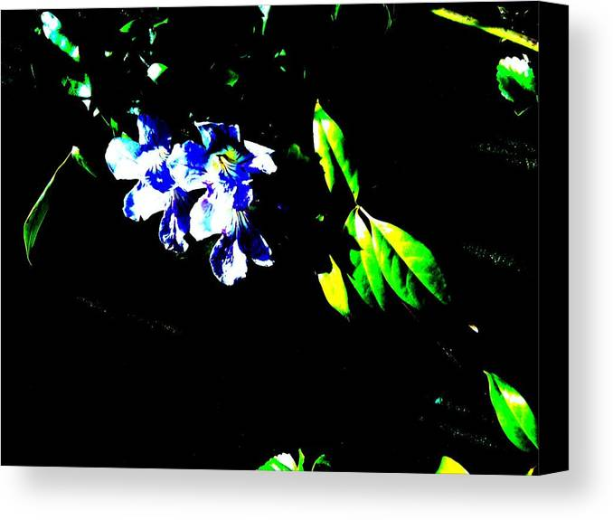 Flowes Canvas Print featuring the photograph Flowers In The Dark by Douglas Kriezel