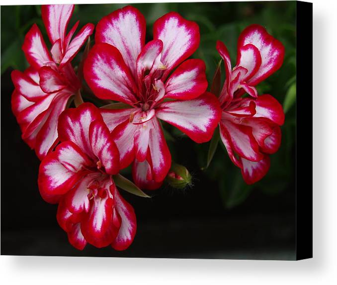 Flowers Canvas Print featuring the photograph Flowers by Michael Canning