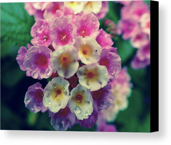Boquete Canvas Print featuring the photograph Flowers Of Boquete Panama by Lora Louise