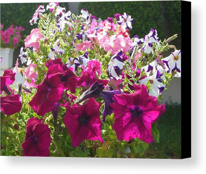 Flowers Canvas Print featuring the photograph Flowers Really Do Smile by Sunaina Serna Ahluwalia
