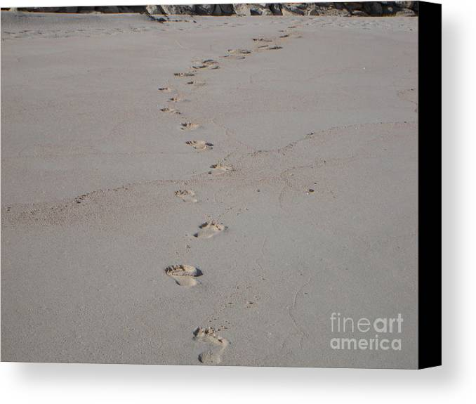 Sand Canvas Print featuring the photograph Follow Me by PJ Cloud
