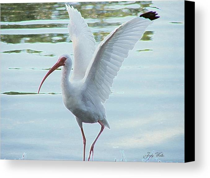 Wings Canvas Print featuring the photograph Freedom by Judy Waller
