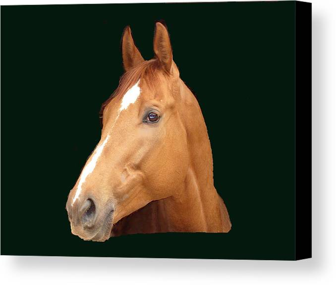 Thoroughbred Canvas Print featuring the painting Friday Night Lights by Kim