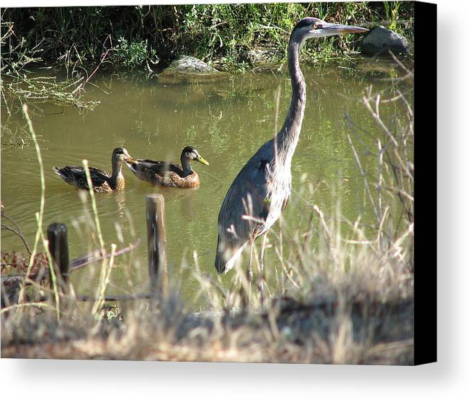 Egert Canvas Print featuring the photograph Friends by Kathy Roncarati
