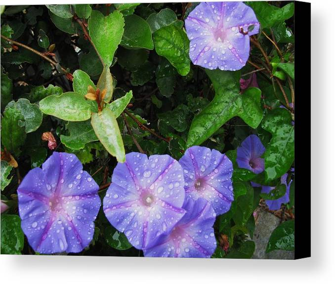 Flower Canvas Print featuring the photograph Glorious Morning by Gloria Byler