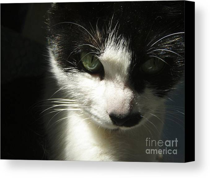 Cat Eyes Canvas Print featuring the photograph Go Ahead Make My Day by Kristine Nora