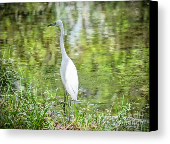 Egrets Canvas Print featuring the photograph Go Fish by Judy Kay