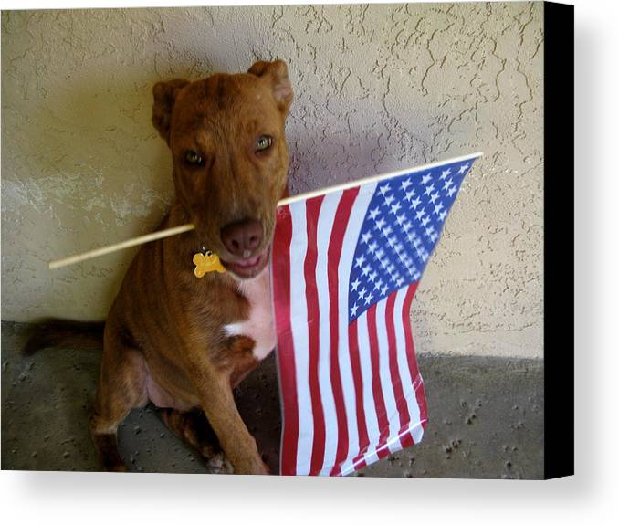 July 4th Canvas Print featuring the photograph God Bless America by PJ Cloud