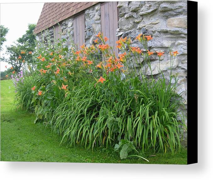 Daylily Canvas Print featuring the photograph Grandmother by Peter Williams