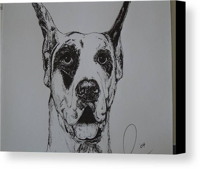 Dogs Canvas Print featuring the drawing Great Dane by Raymond Nash