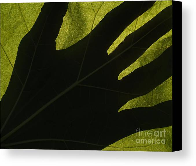 Hand Canvas Print featuring the photograph Hand And Catalpa Veins Backlit by Anna Lisa Yoder