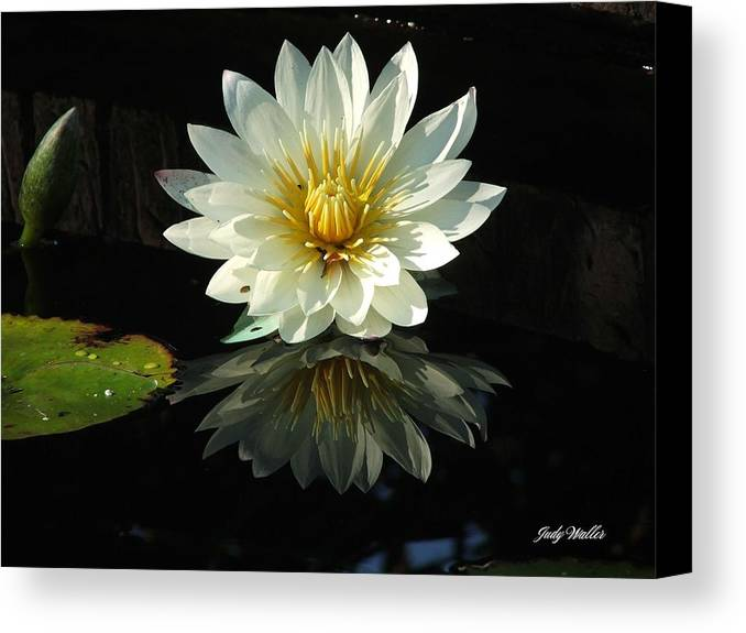 Flower Canvas Print featuring the photograph Haven Hospice Water Lily by Judy Waller