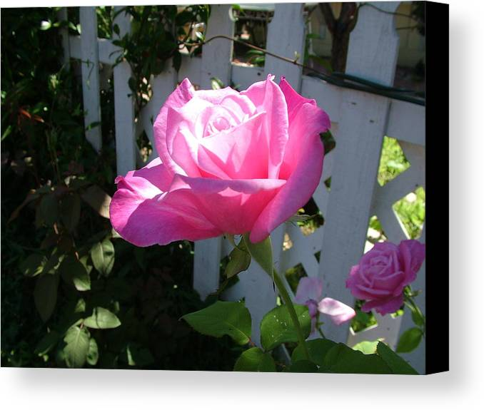 Rose Canvas Print featuring the photograph Heavenly Rose by John Loyd Rushing