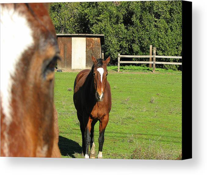 Horse Canvas Print featuring the photograph Horses by Kathy Roncarati