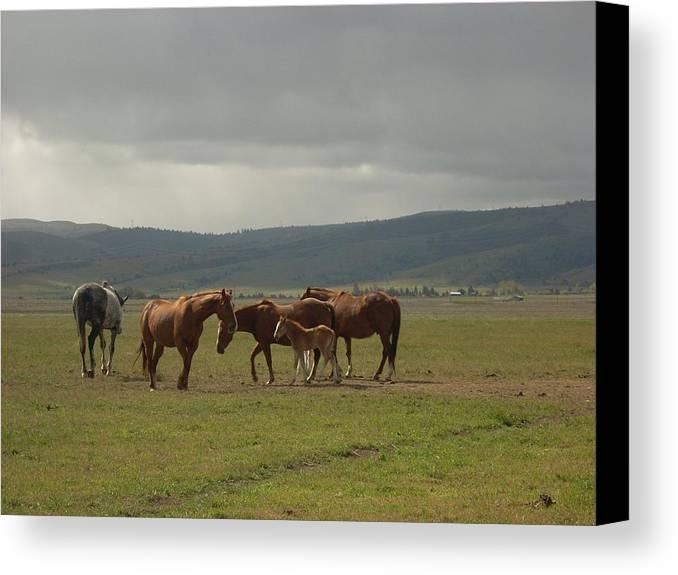 Horse Canvas Print featuring the photograph Horses by Sara Stevenson