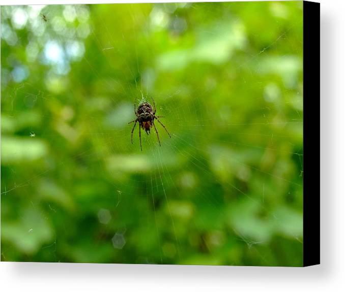 Spider Canvas Print featuring the photograph Hunter by Dorin Emanoil Pirvu