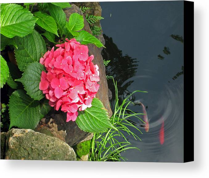 Hydrangea Canvas Print featuring the photograph Hydrangea And Koi by Angela Siener