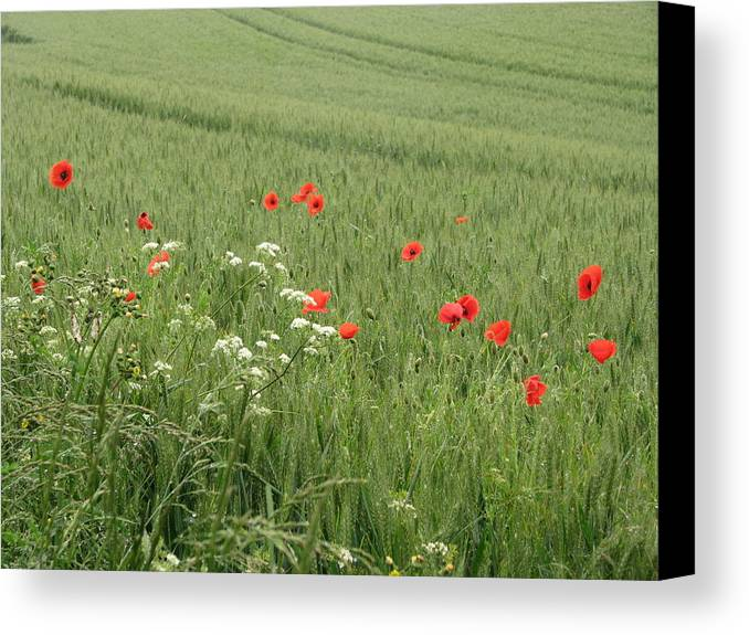Lest-we Forget Canvas Print featuring the photograph in Flanders Fields the poppies blow by Mary Ellen Mueller Legault