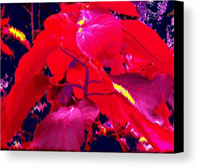 Abstract Canvas Print featuring the photograph In The Jungle by Ian MacDonald